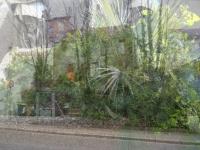 http://mydoriane.com/files/gimgs/th-22_38_vegetation-web_v2.jpg